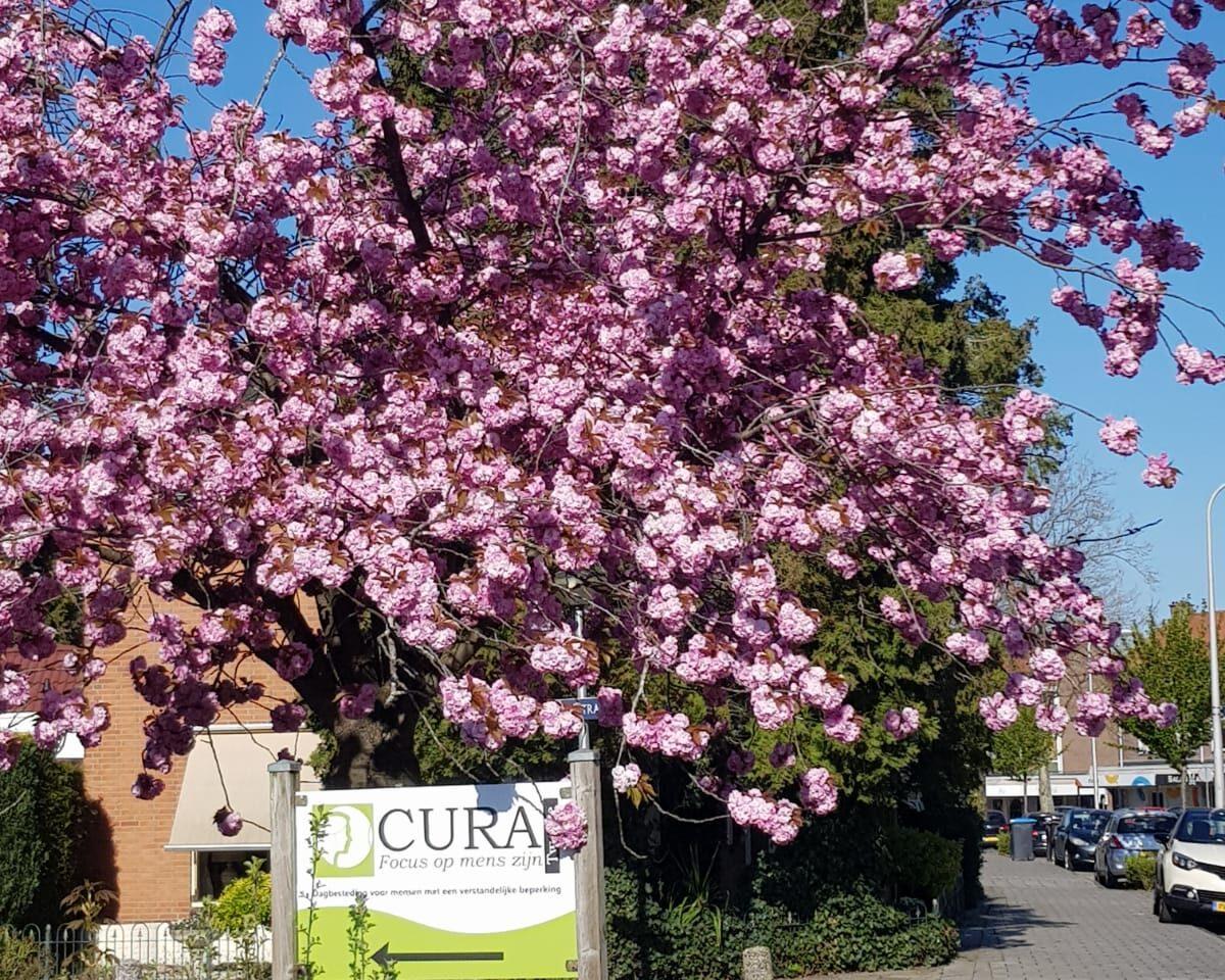 Onze bomen in bloei!